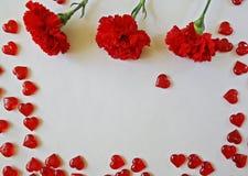 Cravos vermelhos em um fundo branco imagem de stock