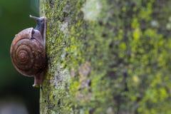 Craw σαλιγκαριών Στοκ Εικόνες