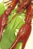 craw ψάρια Στοκ φωτογραφία με δικαίωμα ελεύθερης χρήσης