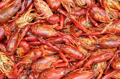 Craw fish Stock Photo