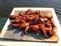 Craw fish Feast stock images