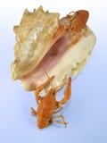 Crawfihes no seashell imagens de stock