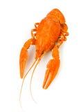 Crawfish закипели одно Стоковые Фотографии RF