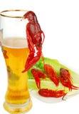 crawfish пива Стоковое фото RF