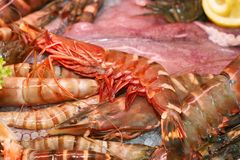crawfish сырцовые стоковое фото