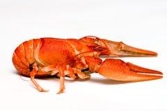 crawfish Стоковая Фотография RF