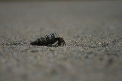 crawfish Стоковое фото RF