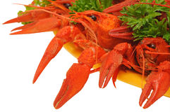 Crawfish. Boiled crayfishes on a dish with parsley and dill Stock Photography