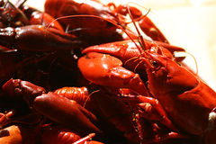 Crawfish. Royalty Free Stock Image