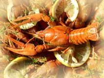 crawfish Royaltyfria Bilder