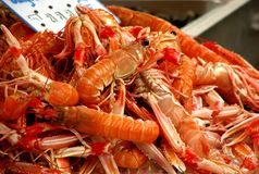 Crawfish Royalty Free Stock Images