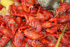 Crawfish. Getting Crayfish ready to boil at a cookout with selective DOF Royalty Free Stock Image
