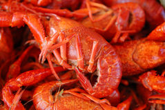 Crawfish. Getting Crayfish ready to boil at a cookout with selective DOF Stock Images