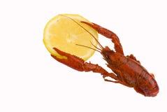 crawfish Стоковые Изображения