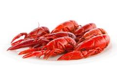 Crawfish Royalty Free Stock Image
