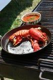 crawfish Royaltyfri Foto