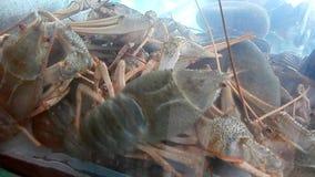 Crawfish in aquarium stock footage