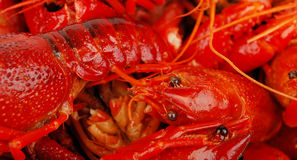 Crawfish background. Royalty Free Stock Photography