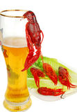 Crawfish and Beer Royalty Free Stock Photo