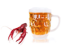 Crawfish and beer Royalty Free Stock Image