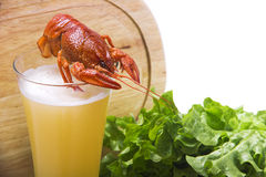 Crawfish with beer раки с пивом Stock Photo