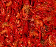 Crawfish Boil. An up close shot of a cajun crawfish Boil royalty free stock photo