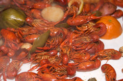 Crawfish Boil. Crawfish from a Louisiana Cookout stock images