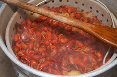 Crawfish Boil. Crawfish from a Louisiana Cookout