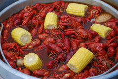 Free Crawfish Boil Stock Images - 8041004
