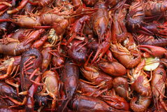 Crawfish Boil. Crawfish are dumped on a table during a crawfish boil stock images
