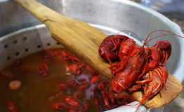 Crawfish Boil. Crawfish are cooled for a taste test during a crawfish boil stock photo