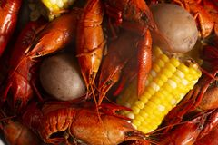 A Crawfish Boil with Corn on the Cob and Potatoes. Crawfish Boil with Corn on the Cob and Potatoes royalty free stock image
