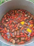 Crawfish boil Stock Image