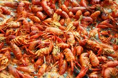 Crawfish Boiling Royalty Free Stock Photo
