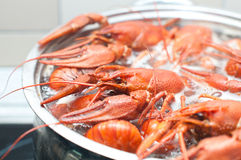 Crawfish boiling in a large pot Royalty Free Stock Images