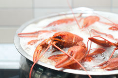 Crawfish boiling in a large pot Stock Photography