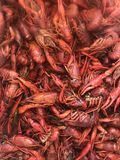 Crawfish in a boiling pot Stock Image