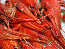 Crawfish close-up Royalty Free Stock Photo