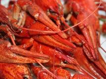 Crawfish close-up Royalty Free Stock Photo