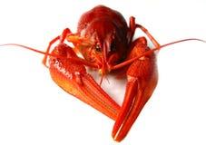 Crawfish Royalty Free Stock Images