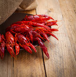 Crawfish Stock Image