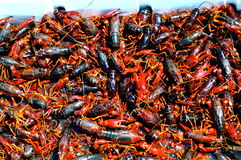 Crawfish cookout. Delicious louisiana crawfish waiting to be eaten Stock Image