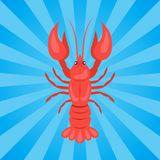 Crawfish or Crawdads, Freshwater Lobster Yabbies Royalty Free Stock Photography