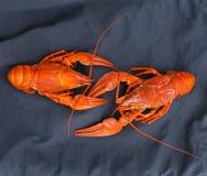 Crawfish crayfish Royalty Free Stock Photos