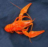 Crawfish crayfish Royalty Free Stock Photography