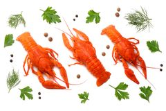 Crawfish with dried fish isolated on white background. Beer brewery concept. Beer background royalty free stock photography