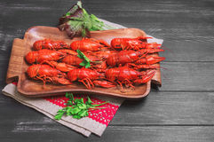 Crawfish food photo. Cancers to beer, dill, boiled crawfish, beer snacks, green leaves of fresh lettuce, parsley, on a special tray for cancers Crayfishon on a Royalty Free Stock Photo