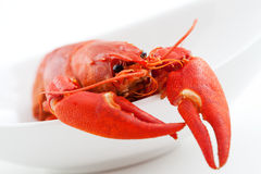 Crawfish Royalty Free Stock Photography
