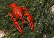 Crawfish on green fennel background. Beer snacks. royalty free stock image