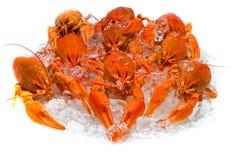 Crawfish on ice Royalty Free Stock Photos